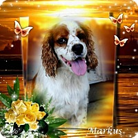 Adopt A Pet :: Markus - Crowley, LA