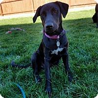 Adopt A Pet :: Retta - Broomfield, CO