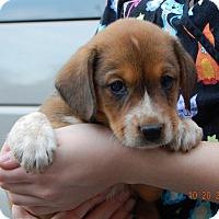 Adopt A Pet :: Zodiac (5 lb) Video! - Sussex, NJ