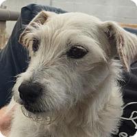 Adopt A Pet :: Ginger (Long Beach) - Carmichael, CA