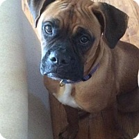 Adopt A Pet :: Monte - Hurst, TX