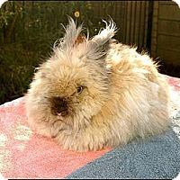 Adopt A Pet :: Tina Turner - Phoenix, AZ