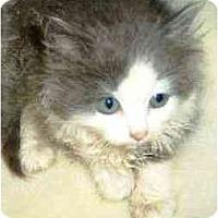 Adopt A Pet :: Clifton - Island Park, NY