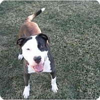 Adopt A Pet :: Petey - Long Beach, NY