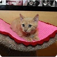 Adopt A Pet :: Emmet - Farmingdale, NY