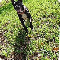 Adopt A Pet :: Sprout - Lake Worth, FL