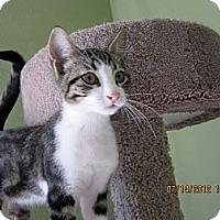 Adopt A Pet :: Calvin - Bunnell, FL