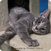 Adopt A Pet :: Gibson - Byron Center, MI