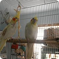 Adopt A Pet :: Mellow Yellow - Neenah, WI
