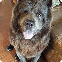 Adopt A Pet :: KAHN - Dix Hills, NY