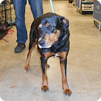 Adopt A Pet :: T-BONE - Wilmington, NC