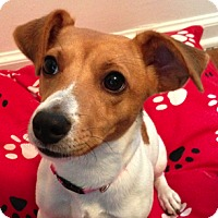 Adopt A Pet :: Maya - Wilmette, IL
