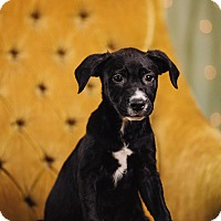 Adopt A Pet :: Feta - Portland, OR