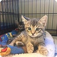 Adopt A Pet :: Spanky & Darla - Island Park, NY