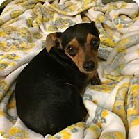 Adopt A Pet :: Tinker - Homewood, AL