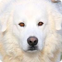 Adopt A Pet :: KILO(BREATHTAKINGLY BEAUTIFUL! - Wakefield, RI