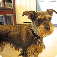 Adopt A Pet :: Daisy~~ADOPTION PENDING - Sharonville, OH