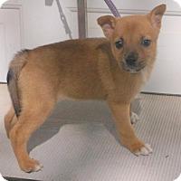 Adopt A Pet :: Olivia - Birch Tree, MO