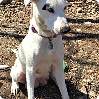 Adopt A Pet :: Sissy - Bernardston, MA
