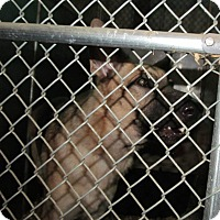Adopt A Pet :: KOBE - Tully, NY