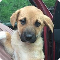 Adopt A Pet :: Lottie - Doylestown, PA
