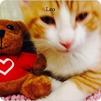 Adopt A Pet :: Leo - Warren, OH