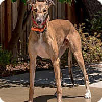 Adopt A Pet :: Donnie - Walnut Creek, CA