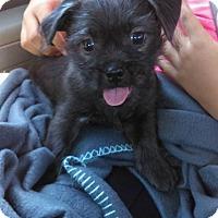 Adopt A Pet :: Gremlin - Sacramento, CA