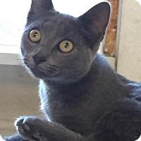 Adopt A Pet :: Brienne - Manchester, MO
