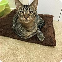 Adopt A Pet :: Kiwi - Mansfield, TX