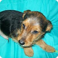 Adopt A Pet :: FREDDIE--adopted** - EASTPOINTE, MI