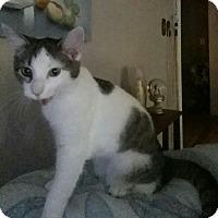 Adopt A Pet :: Miss Mia - Somerset, KY