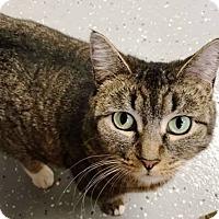 Adopt A Pet :: Kasey - Kalamazoo, MI