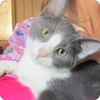 Adopt A Pet :: Pongo - Germantown, MD