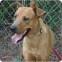 Adopt A Pet :: Brewster - Kingwood, TX