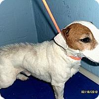 Adopt A Pet :: Tyler - Dundas, VA