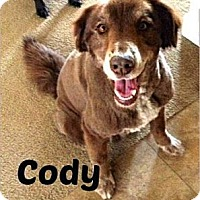 Adopt A Pet :: Cody (Courtesy Listing) - Scottsdale, AZ