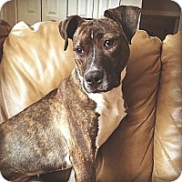 Adopt A Pet :: Izzy - Trenton, NJ