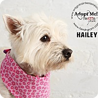 Adopt A Pet :: Hailey-pending adoption - Omaha, NE