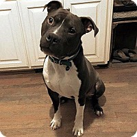 Adopt A Pet :: Connor - Charlotte, NC