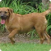 Adopt A Pet :: Lynn - Irmo, SC