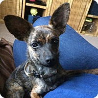 Adopt A Pet :: Leah - Gainesville, FL