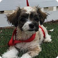 Adopt A Pet :: Leia - Santa Ana, CA