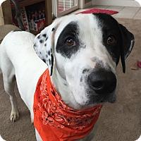 Adopt A Pet :: Polaris - Hanover, PA