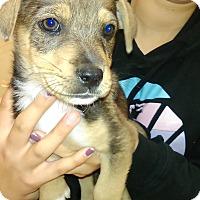 Adopt A Pet :: Ellen - Thousand Oaks, CA