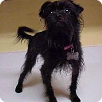 Adopt A Pet :: Toto - 7 lbs - Dahlgren, VA
