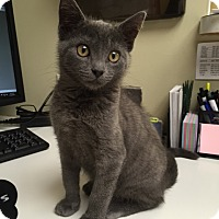 Adopt A Pet :: Jordan Kitten - Miami, FL