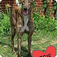 Adopt A Pet :: RUFF RULER - Grandville, MI