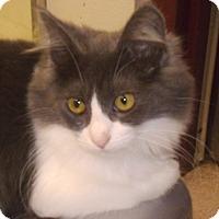 Adopt A Pet :: Angela - Muscatine, IA