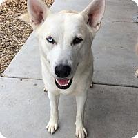 Adopt A Pet :: RJ - McKenna, WA